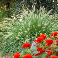How to Use Ornamental Grasses in Midwest Gardens | Midwest Living