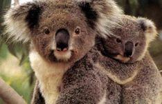 por que se extinguen los animales: en peligro de extincion