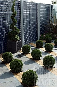 Quality Horticultural Images and Plant and Garden Photos Picture Library with over 2 Million Images! Buxus Sempervirens, Wooden Trellis, Boxwood Garden, World Images, Garden Photos, Topiary, Hedges, Outdoor Gardens, Outdoor Living