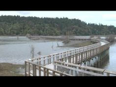 ▶ Nisqually Wildlife Refuge - YouTube