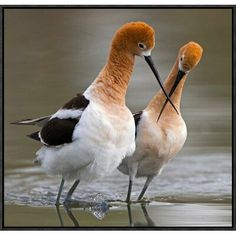 Global Gallery 'Love Crossing' by Verdon Framed Photographic Print Size: 2 All Birds, Little Birds, Love Birds, Angry Birds, Pretty Birds, Beautiful Birds, Animals Beautiful, Exotic Birds, Colorful Birds