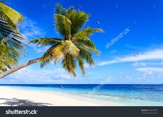 Tropical Sand Beach With Palm Trees, Vacation Concept Стоковые фотографии…
