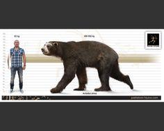 Short-faced bear (Arctodus simus)