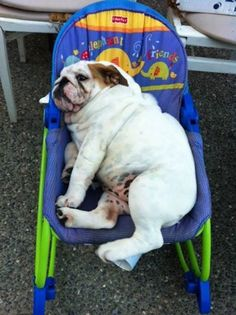 luv my new chair