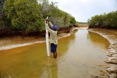 JCU and rangers track climate change - James Cook University scientists and Land and Sea Rangers from the Torres Strait Regional Authority (TSRA) have installed scientific instruments to measure the impact of climate change in Australia's northern-most islands.