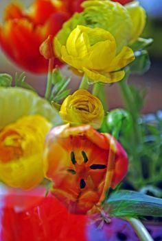 orange tulip and yellow ranunculus no.4