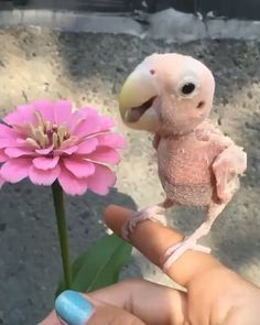 27 Animals Who Made Their Owners Rich (Slide - Pawsome Funny Birds, Cute Funny Animals, Love Birds, Beautiful Birds, Animals And Pets, Baby Animals, Chien Golden Retriever, What Is A Bird, Epic Fail Pictures