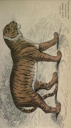 The Naturalist's Library, conducted by Sir William Jardine, Vol. XVI Mammalia, circa 1833.