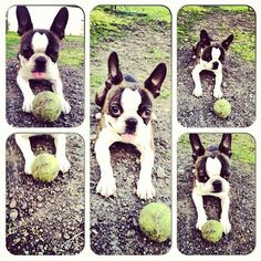 tennis ball obsession