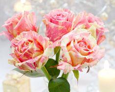 4 Beautiful Rose - 4 gyönyörű rózsa - Megaport Media