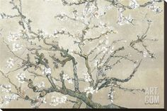 Almond Branches in Bloom, San Remy, c.1890 (tan) Stretched Canvas Print by Vincent van Gogh at Art.com