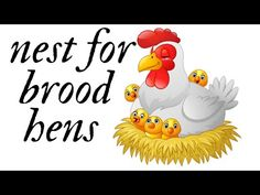 φωλια για κλωσσα - nest for brood hens - YouTube
