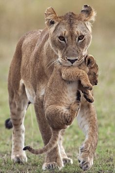 Mum to the rescue by:Anup Shah