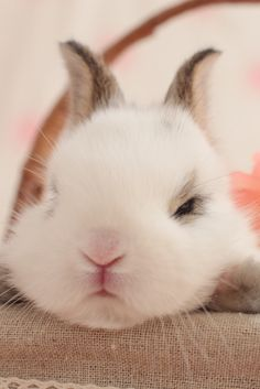 Sshhh! Nap Time...