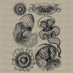 Vintage Jellyfish Jelly Fish Ocean Marine Life by DigitalThings, $1.00