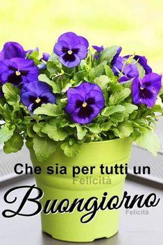 Bouquet, Bouquet Of Flowers, Bouquets, Floral Arrangements