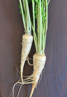 What to do with parsley root, the common herb's root. It's packed with vitamins and a traditional diuretic and de-toxifier. Delicious roasted, pureed or in soups.
