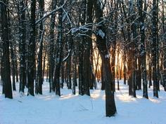 Sun coming through trees