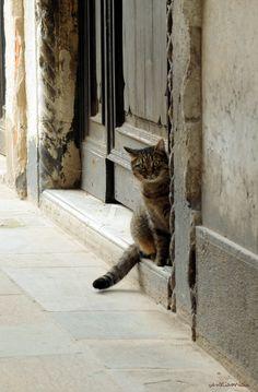 chat vénitien ©VenetiaMicio