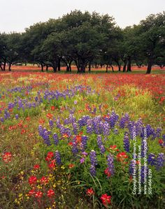 Can't wait for #beautiful flowers in #Texas Hill Country