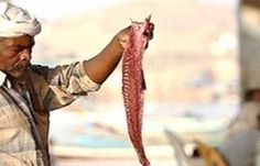 اخبار اليمن العربي: حضرموت.. تعرف على أسعار اللحوم والخضروات والفواكه اليوم 22/1/2017