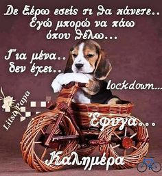 Good Morning Happy, Dogs, Irene, Animales, Flowers, Pet Dogs, Doggies