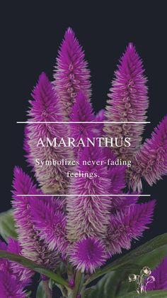 Flower Symbol, Amaranthus, Daffodils, Symbols, Feelings, Flowers, Plants, Plant, Royal Icing Flowers