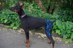 Creative grooming airbrushed Bubble butt, 3d bubbles on Doberman