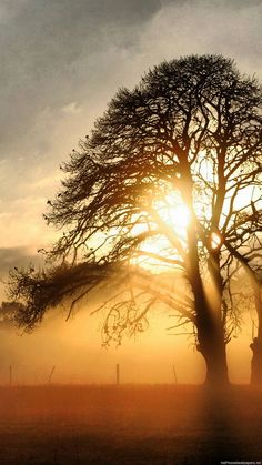 Full HD Tree Field Fog Sunrise IPhone 6 Wallpapers And Plus Background Images Lock Screen Vertical Iphone