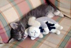 Adorable!  RT @EmrgencyKittens inception cat cuddles a stuffed cat who's also cuddling a cat pic.twitter.com/62ZSxnRzED