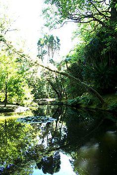 O Parque Terra Nostra é um jardim botânico português localizado no Vale das Furnas, concelho da Povoação, ilha de São Miguel, aquipélago dos Açores.  Este parque encerra uma das maiores colecções do mundo de camélias, tendo mais de 600 genros diferente e também a maior colecção da Europa de Cicas.