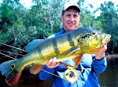 Fly Fishing Peacock Bass