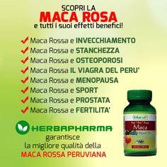 Conosci i benefici della #maca rossa? #macaroja #macarossa #herbapharma #naturale #viagra #stress #invecchiamento