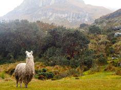 Cajas National Park, Ecuador