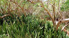 community, equality, peace and local bandits - Isla de Margarita, Venezuela, South America South America, Equality, Community, Peace, Plants, Travel, Venezuela, Social Equality, Voyage