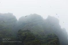 Fogged. by benjaminhardman #nature #travel #traveling #vacation #visiting #trip #holiday #tourism #tourist #photooftheday #amazing #picoftheday