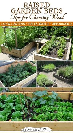 Tips for choosing wood for raised garden beds considering cost, sustainability, and how long they will last.