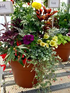 Drop in anytime between 10 a.m.-4 p.m. this Sat., June 13, to plant a colorful creation brimming with flowers at our Container Workshop. Back by popular demand! Buy or bring an EMPTY pot & benefit from free potting soil & design advice, with a minimum $10 plant purchase. All plants and accessories must be purchased on-site. If using a big pot, please bring lightweight material like Styrofoam packing peanuts to fill the bottom and ease transport. Don't forget garden gloves for this DIY…