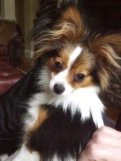 Former Puppy