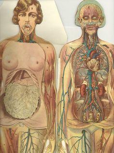 #antique #anatomy