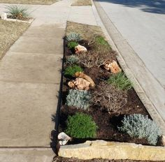 Xeriscape for the front yard curb area - second idea