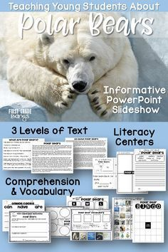 Powerful slideshow, close reading texts, and lots of printables teach young students all about polar bears! #polarbears #animals #closereading #kindergarten #firstgrade #secondgrade