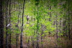Everglades Fl,