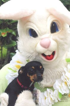 It's a good thing the dog doesn't care about this scary Easter Bunny #freakybunny #dogportrait
