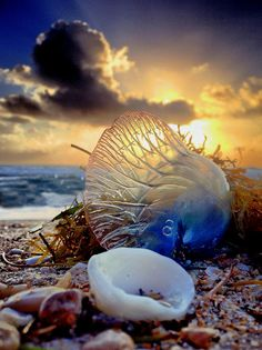 A Man o'War, adventures done. by Andy Royston / Ft Lauderdale Sun, via Flickr