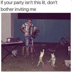 """If your party isn't this lit, don't bother inviting me."" Cats dancing to accordion music. F YEAH!!!"