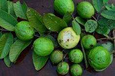 Guava assessment on Allripe by Jeanette Orcullo.