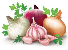 vs Prebiotics: What You Need To Know For Gut Health Prebiotics like onions and garlic are delicious additions to a gut health diet.Prebiotics like onions and garlic are delicious additions to a gut health diet. Fruit And Veg, Fruits And Veggies, Vegetables, Vegetable Pictures, Garlic Health Benefits, Food Clipart, Decoupage Vintage, Exotic Food, Fresh Garlic
