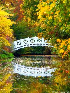 Bridge To The Paradise  by Victoria S. on 500px