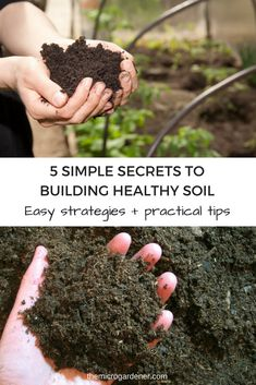 Discover how chemicals, digging & compaction, organic matter, ground covers + moisture affect soil health. Dig into easy practical tips to create healthy soil and plants. Organic Soil, Organic Gardening Tips, Organic Farming, Sustainable Gardening, Organic Plants, Veg Garden, Garden Soil, Garden Tips, Garden Ideas